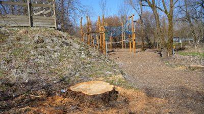 Baumstumpf am Wertachpark: Viele Weiden wurden gefällt ohne Neuanpflanzung auf dem Gelände.