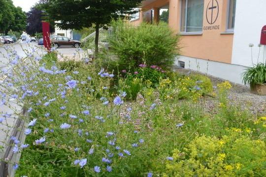 Naturwiese-Gartenweg