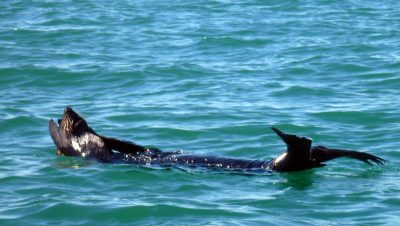 Seehund-Urlaub