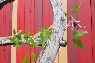 Kletterpflanzen Beate Römlein