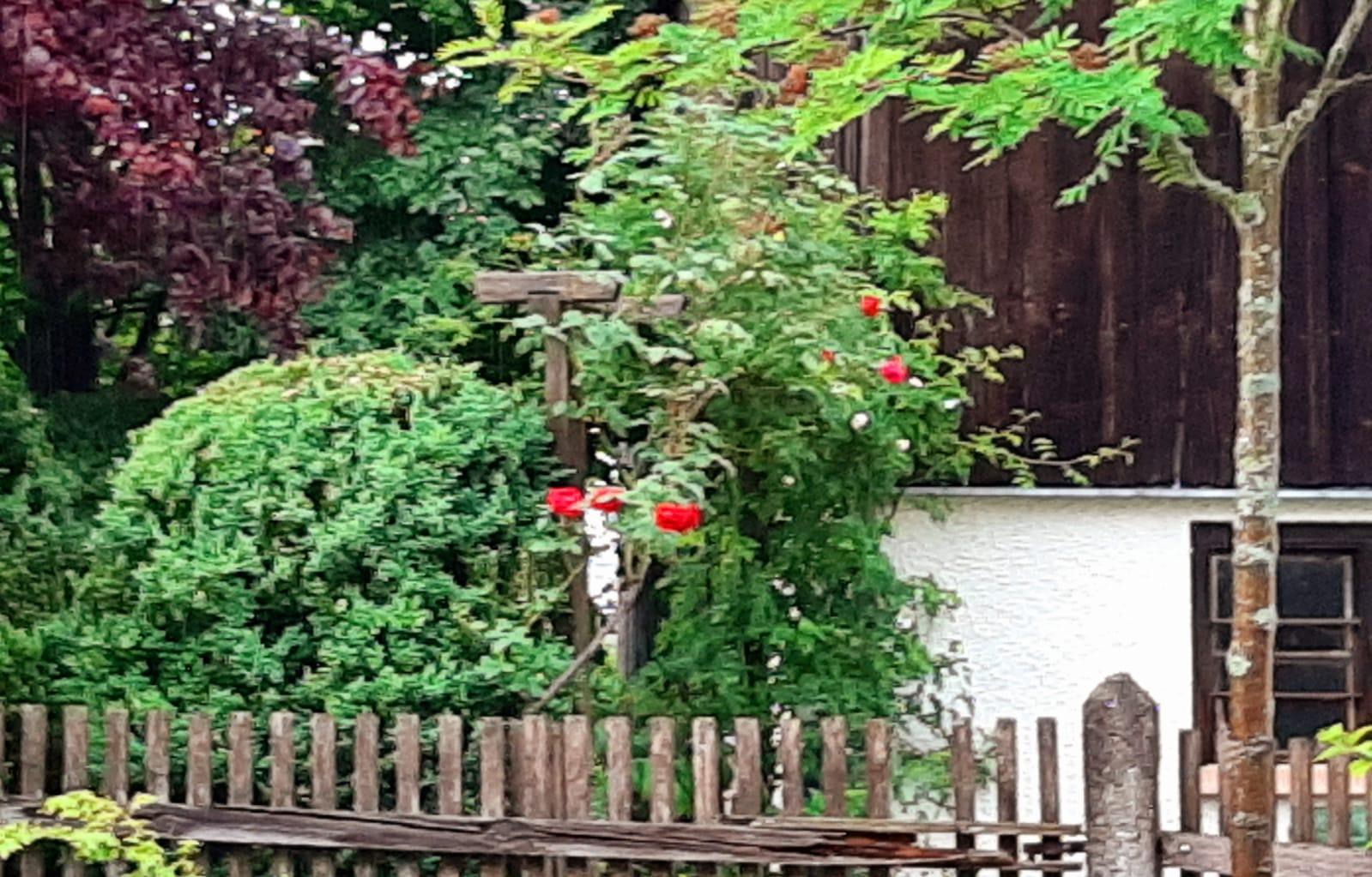 Vertikales Grün am Gartenzaun Beate Römlein
