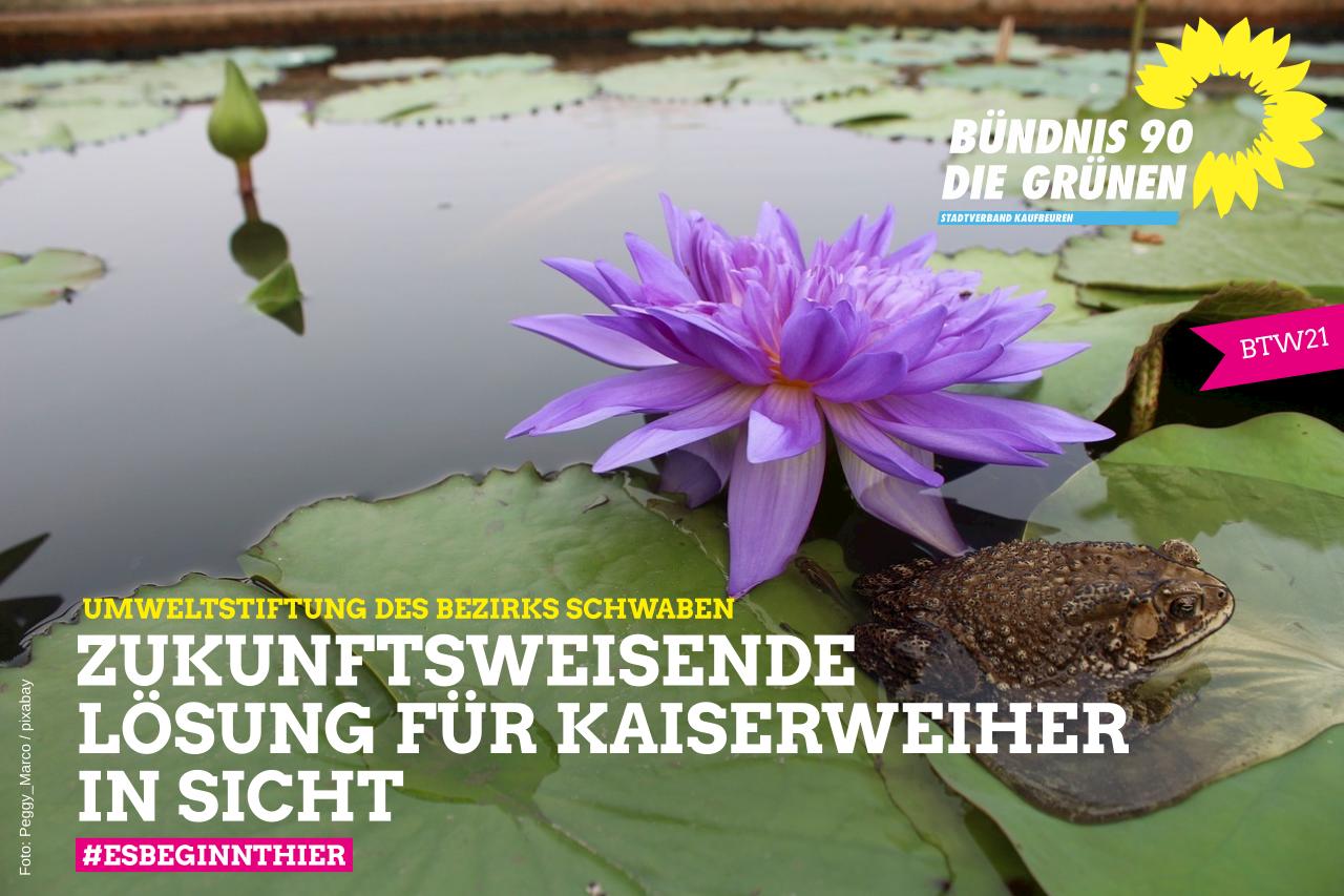 Amphibienparadies Kaiserweiher – Zukunftsweisende Lösung in Sicht